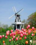 001-Windmill-Small2.jpg