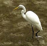 670-Egret.jpg