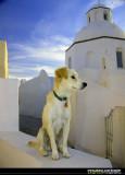 Doggies in Greece