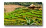 Rice fields-Rizières