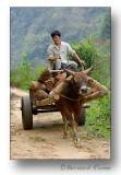 Vietnamese peasant-paysan vietnamien
