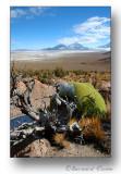 Paysage Bolivien avec Yareta