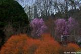 Spring Adds Color To Alton Baker Park