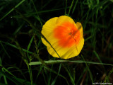 P7000-062011-036.jpg