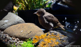 Little Bird By The Pond