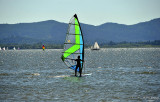 A Sailboarder On Fern Ridge Lake