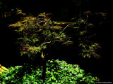 A Tree Grows In Woodburn