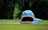 This Whale's Got Some Real Teeth!