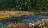 Fox Hollow Pond