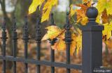 Fence and leaves