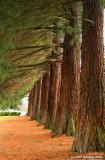 Redwood Lineup