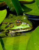 12-07 Frog.jpg