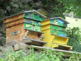the monument operators have restarted the abbey farm, keeping bees...