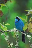 Turquoise Jay 3