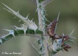 Overige insecten