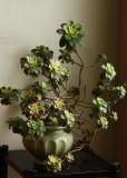 Pinwheel Cactus7.jpg
