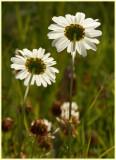 Wild Flowers4.jpg