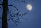 Misty Moon.jpg