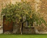 Courtyard Lacock Abbey.jpg