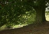 Avebury Trees.jpg