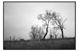 Two trees2.jpg