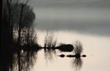 Dawn Reflection.jpg