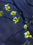 Spring Greens.jpg