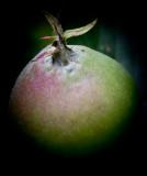 ein noch ganz kleiner Apfel