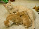 Blondie and Buddy have created 3 little kitties.