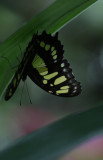 cockrell_butterfly_center_2011