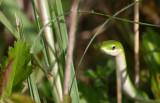 rough green snake.jpg