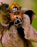 Makin' Ladybugs