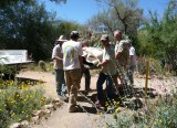 Arboretum Staff and Volunteers carrying a large cactus