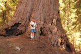 Tammy by a Giant Sequoia