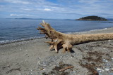Log on Beach at Deception Pass State Park, Washington