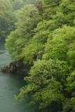 Miyagase's fresh greens