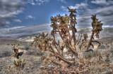 HDR in the desert
