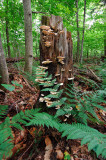 catskills stump