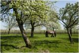 Sint Geertruid - voorjaar 2011