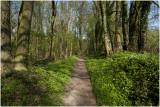 voorjaar in het Savelsbos