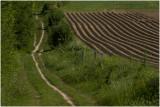 aardappelruggen naast het wandelpad op de Strooberg