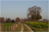 landschap met zwart mosterdzaad