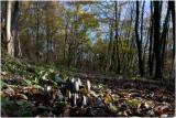 Inktzwammen in het Kolmonderbos
