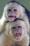 Double monkey trick.jpg