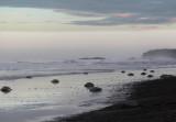 Early beach light III copy.jpg