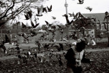 Pigeons on the loose!