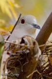 Dans le nid...