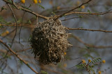 Weaver nest - Wevernest