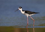 2012 Bird Photos