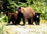 Nikki and the Cubs